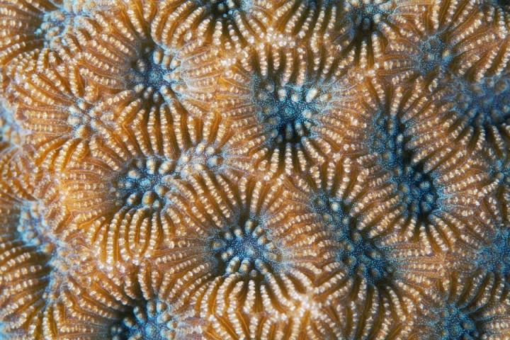 Corals11 Макрофотографии кораллов