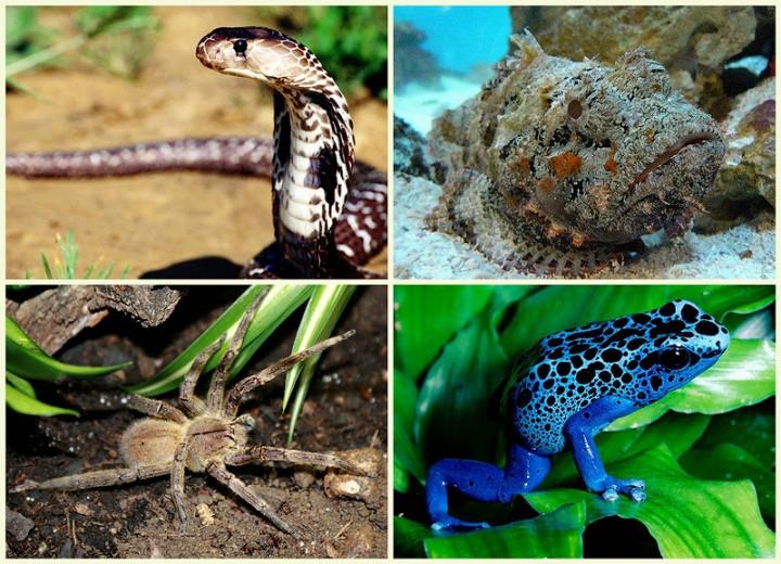 BIGPIC11 Топ 10 самых ядовитых животных на планете