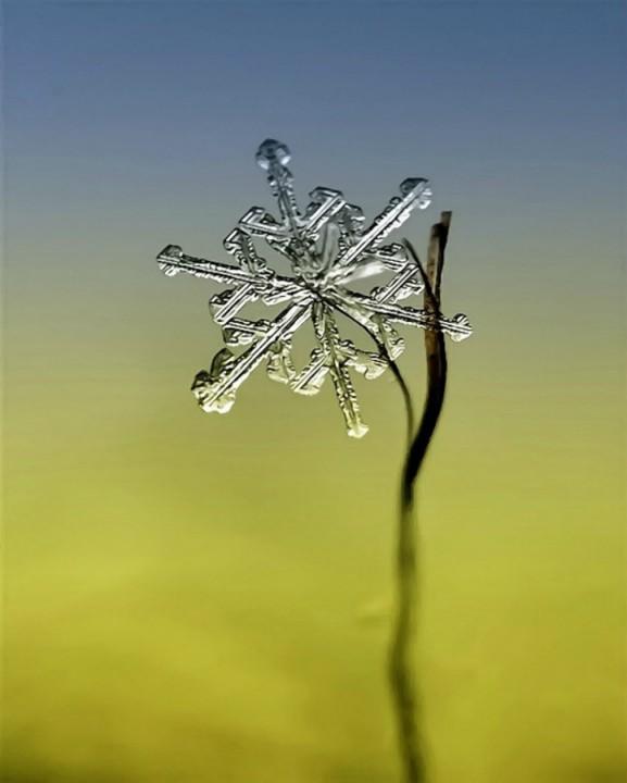 snejinkimakro 3 Снежинки. Фотограф Андрей Осокин