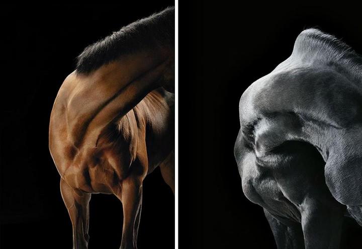 Horsei 2 Грация прекрасных лошадей в фотопроекте Equus