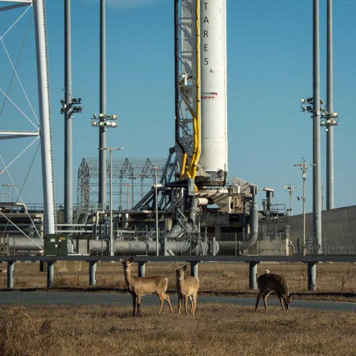 Белохвостые олени собрались посмотреть старт ракеты