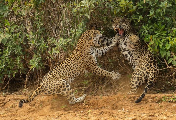 bestofwild06 Лучшие фотографии диких животных за 2013 год