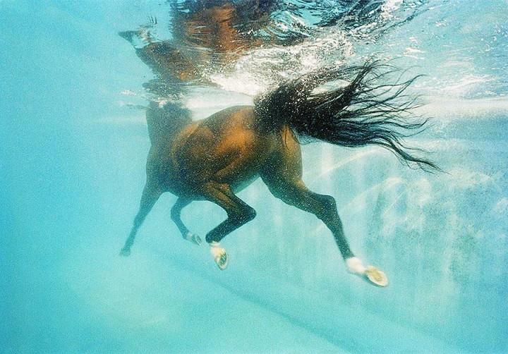 Horsei 3 Грация прекрасных лошадей в фотопроекте Equus