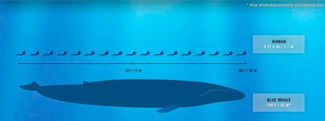 Самые большие животные в мире...