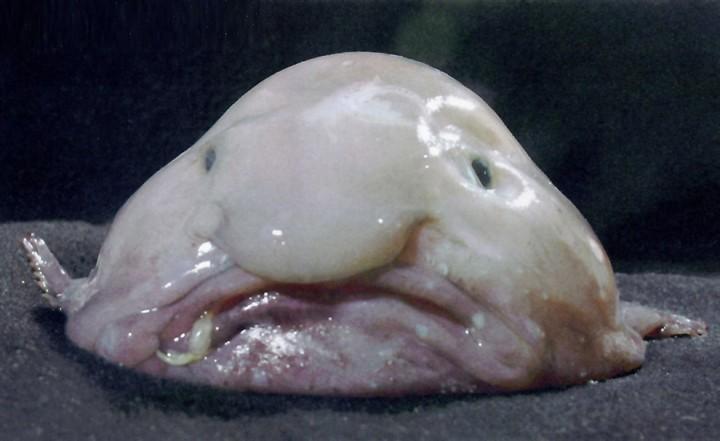 prichudlivieribi 9 Топ 10 самых причудливых рыб мирового океана