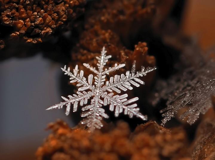 snejinkimakro 10 Снежинки. Фотограф Андрей Осокин