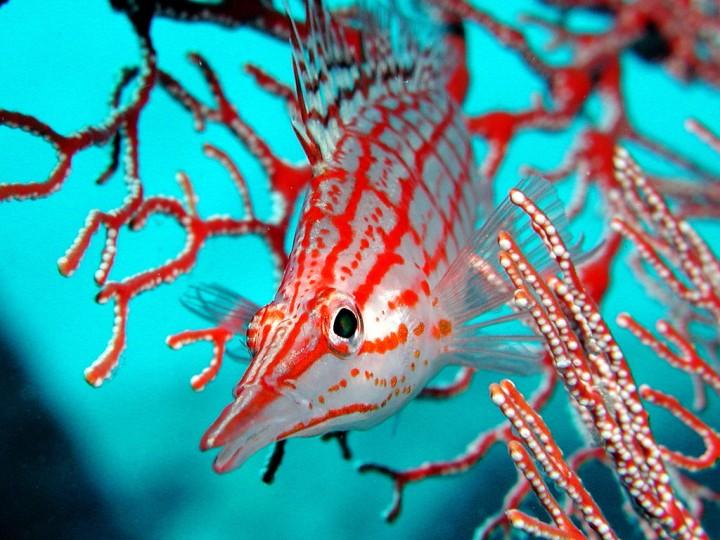 811 Удивительный подводный мир