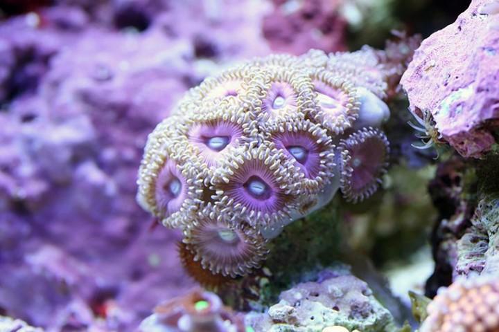 Макро фото кораллов
