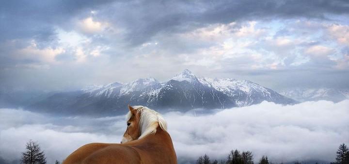 Horsei 11 Грация прекрасных лошадей в фотопроекте Equus