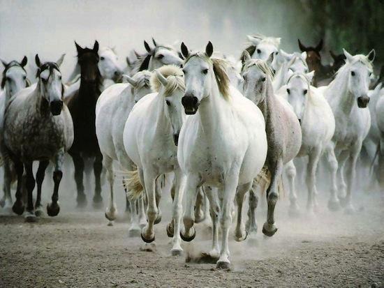 24 факта о лошадях