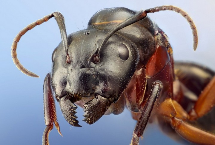 insects17 Портреты насекомых