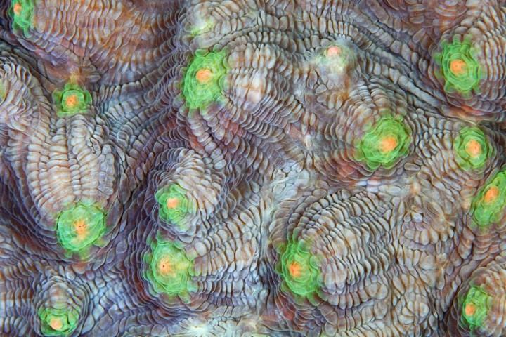 Corals02 Макрофотографии кораллов