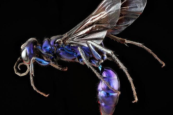 Insects12 Прекрасные насекомые