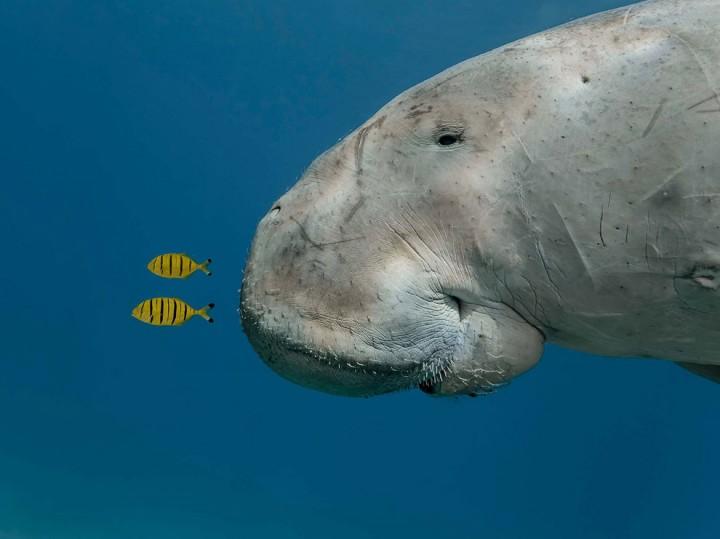 bestofwild18 Лучшие фотографии диких животных за 2013 год