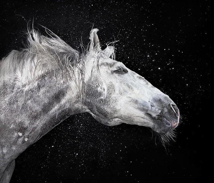 Horsei 9 Грация прекрасных лошадей в фотопроекте Equus