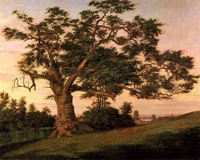 что-то подсказывает картинки старинных деревьев прокуратуре отсутствует официальной