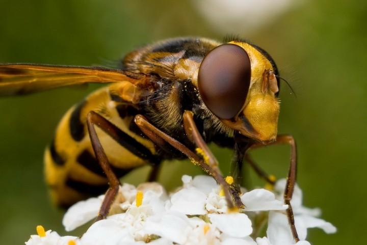 insects56 Портреты насекомых