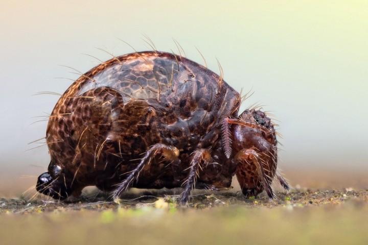 insects07 Портреты насекомых