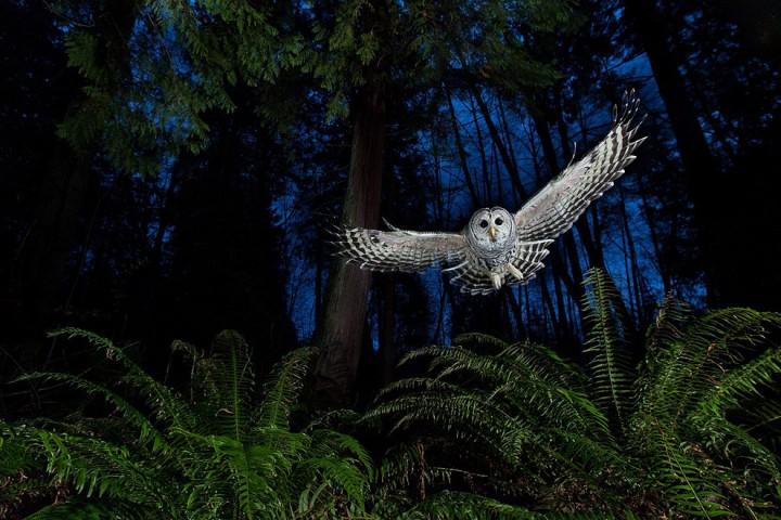 bestofwild02 Лучшие фотографии диких животных за 2013 год