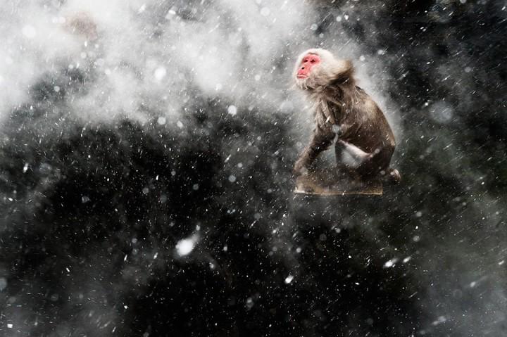 bestofwild08 Лучшие фотографии диких животных за 2013 год