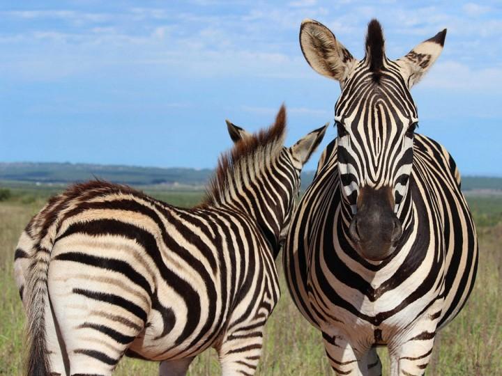 bestofwild11 Лучшие фотографии диких животных за 2013 год