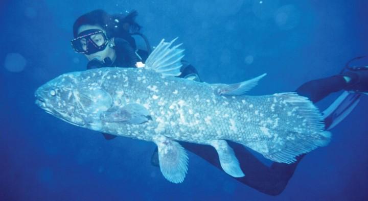 prichudlivieribi 7 Топ 10 самых причудливых рыб мирового океана