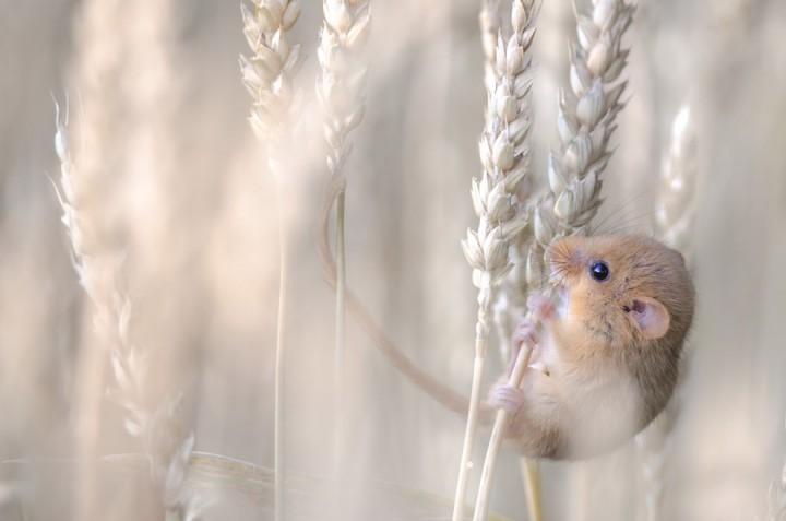 bestofwild20 Лучшие фотографии диких животных за 2013 год