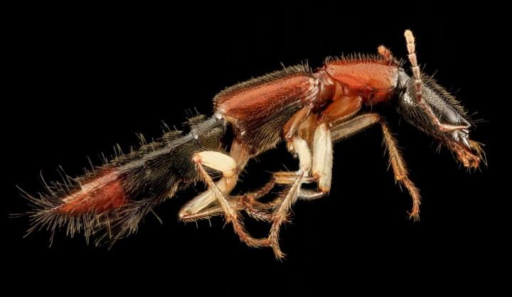 Insects16 Прекрасные насекомые