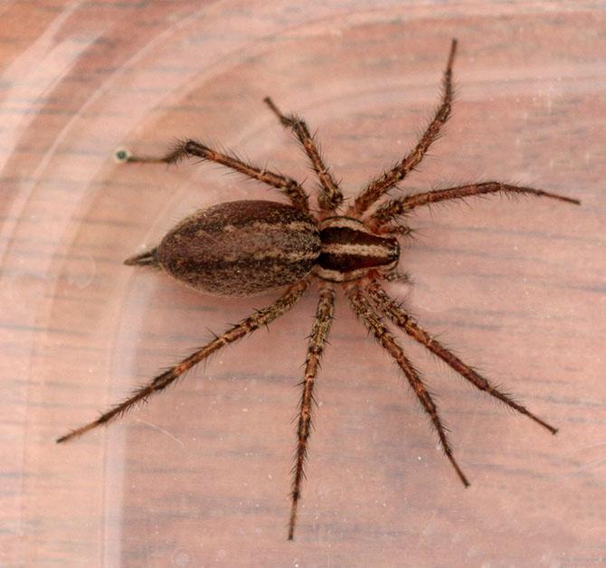 25 самых опасных насекомых