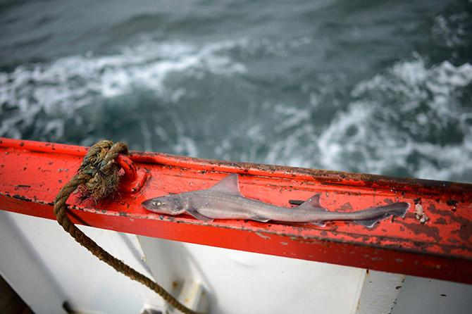 Рыбный промысел у берегов Англии