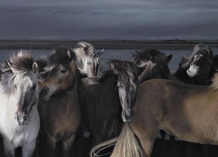 Horsei 22 Грация прекрасных лошадей в фотопроекте Equus