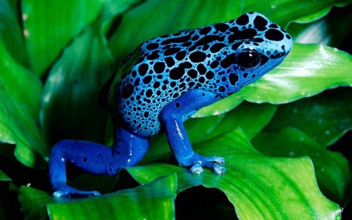 yadovitiejivotnie 6 Топ 10 самых ядовитых животных на планете