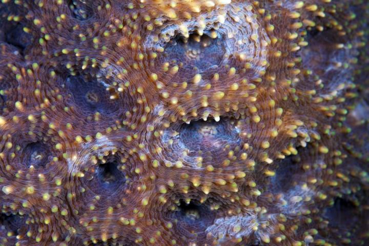 Corals10 Макрофотографии кораллов