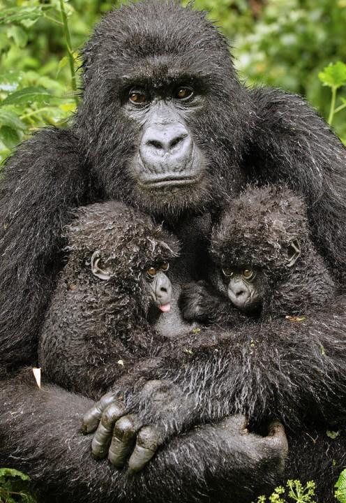 bestofwild10 Лучшие фотографии диких животных за 2013 год