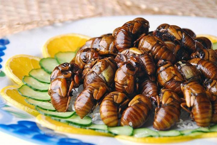 edible01 Фотогид по съедобным насекомым