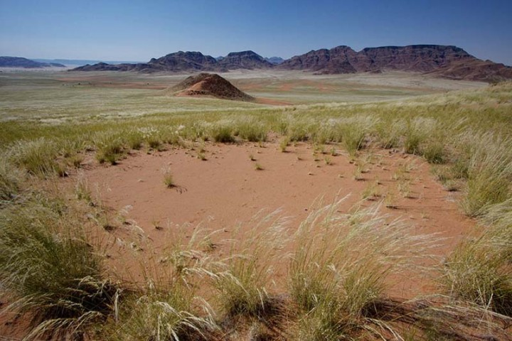 mysterious fairy circles of namibia 8 Таинственные круги Намибии