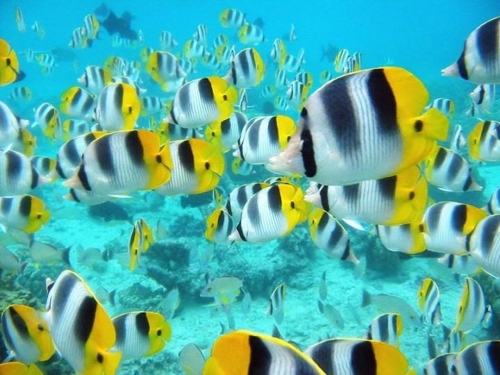 1227 15 удивительных косяков рыбы