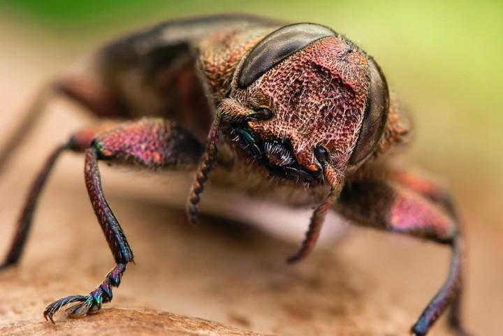 insects21 Портреты насекомых