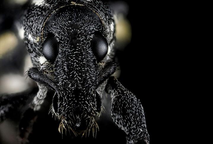 Insects13 Прекрасные насекомые