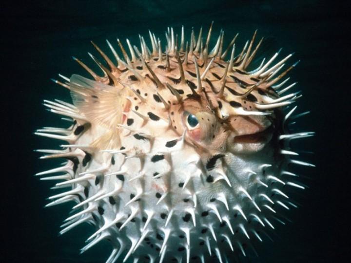 yadovitiejivotnie 10 Топ 10 самых ядовитых животных на планете