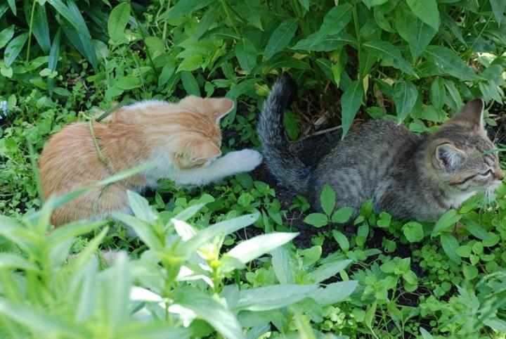 Как избавиться от котов в своем огороде