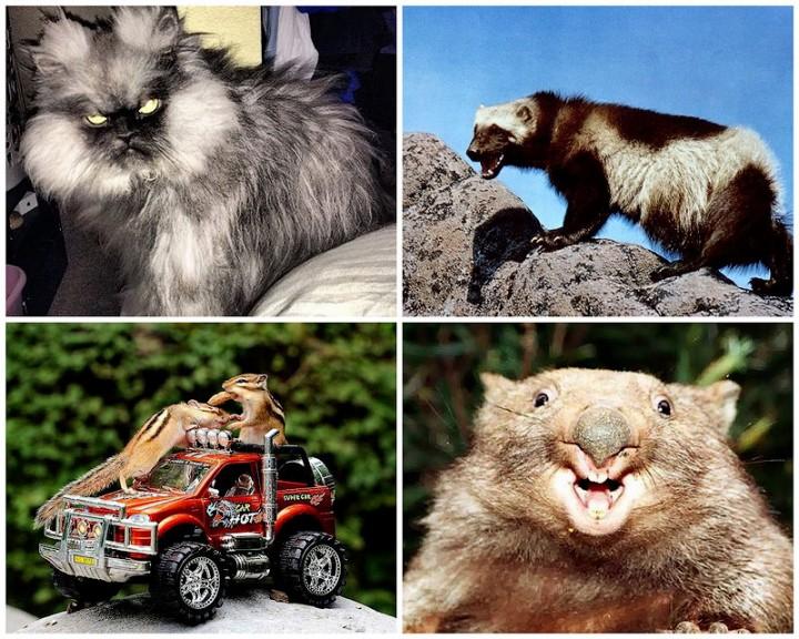 BIGPIC47 Животные, которым не страшен апокалипсис