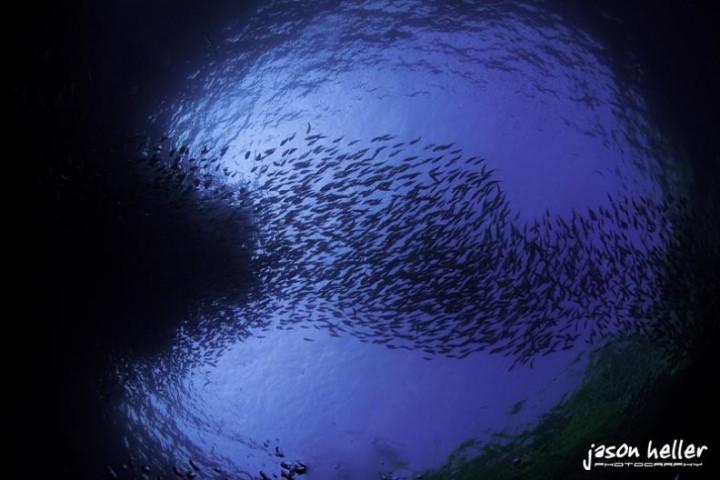 1026 15 удивительных косяков рыбы