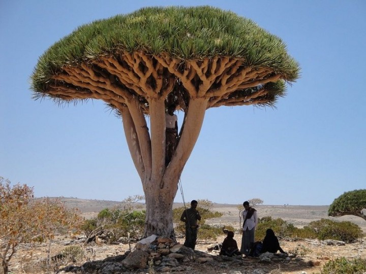 Socotra11 Удивительный остров Сокотра