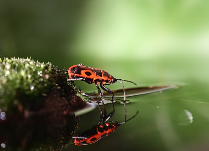 ulitkiinasekomie 16 Улитки и насекомые в макрофотографиях Вадима Трунова