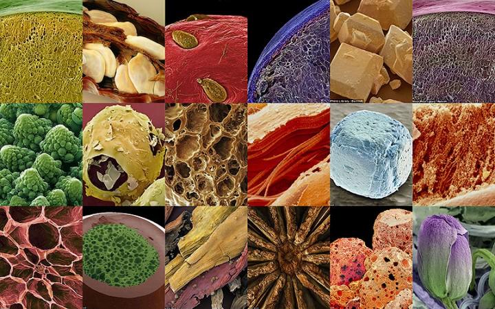 BIGPIC33 18 удивительных фото продуктов под микроскопом