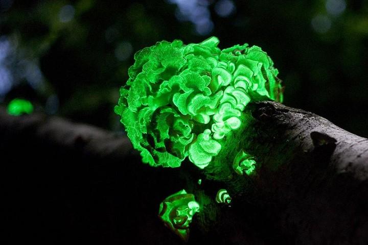 Fungi02 Самые красивые грибы в мире