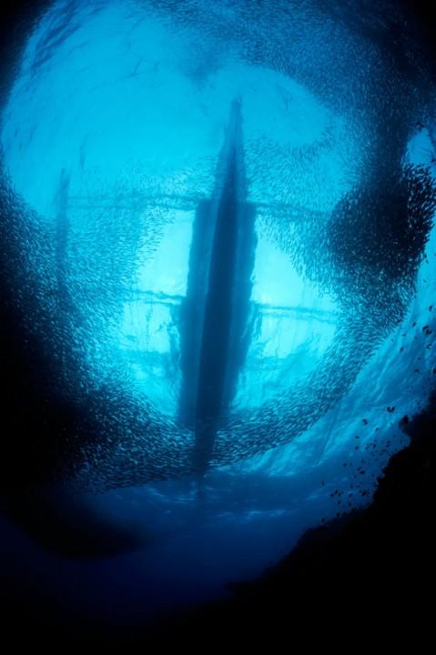 Самый огромный рыбий косяк на Земле