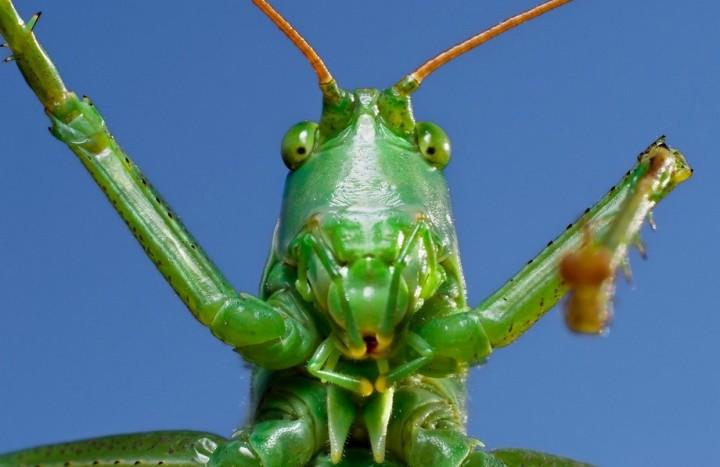 insects57 Портреты насекомых