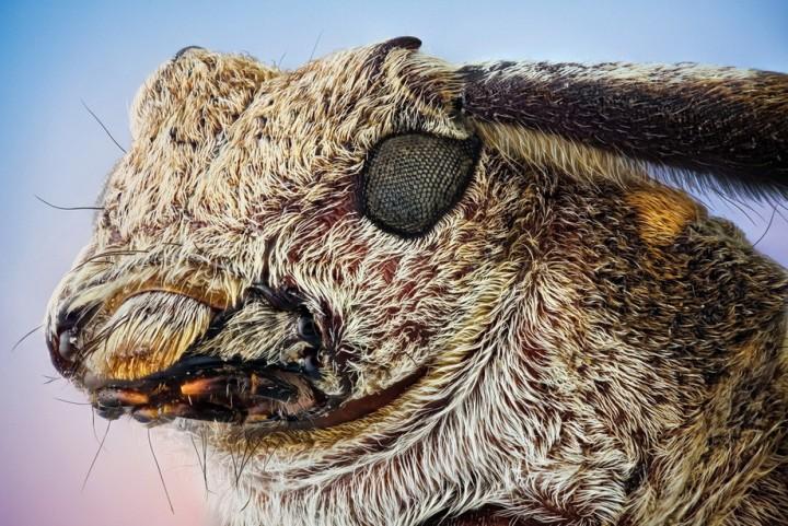 insects01 Портреты насекомых